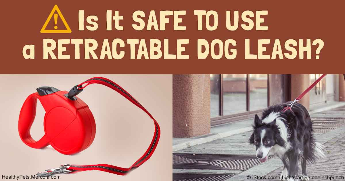is-it-safe-to-use-retractable-dog-leash-fb
